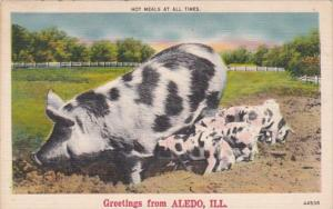 Illinois Greetings From Aledo Mother Pig With Young Hot Meals At All Times