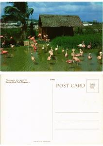 CPM  Singapore - Flamingoes at a pond in Jurong Bird Park  (694583)