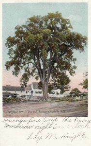SOMERSWORTH, New Hampshier, 1907; Largest Elm in the United States