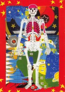 Postcard Skeleton, Principal Bones by Illustrator Michael Leigh #368
