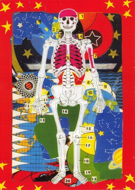 Postcard Skeleton, Principal Bones by Illustrator Michael Leigh #368