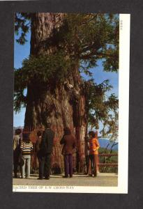 Sacred Tree Holy EW Crossway Taiwan Republic of  China Postcard