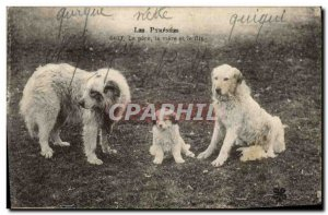 Postcard Old Dogs Dog Pyrenees The father mother and son