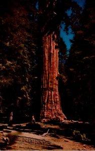 California Sequoia National Park The President Tree