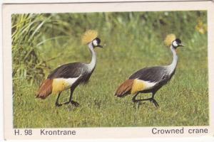 Trade Card Dandy Gum Wild Animals H 98 Crowned Crane