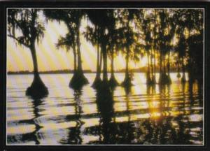 Florida Beautiful Sunset Scene Over Cypress Trees