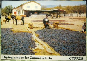 Cyprus Drying grapes for Commandaria - unposted