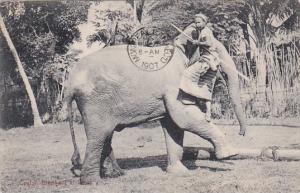 Elephants At Work Ceylon Sri Lanka 1907