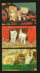 Lot of 3 1970's Kittens Postcards Unposted