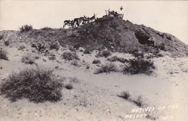 Arizona Donkeys Natives Of The Desert Real Photo