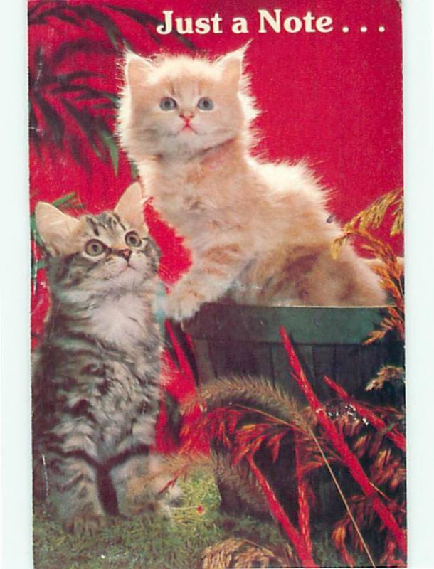 North Shore Animal League Shelter for Abandon Dogs and Cats Postcard