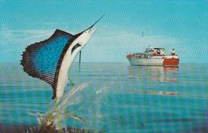 Fishing A Jumping Sailfish