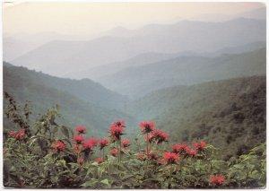 Great Smoky Mountains, used Postcard