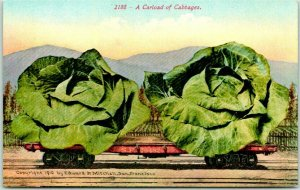 1910s California Fruit EXAGGERATION Postcard A Carload of Cabbages Mitchell