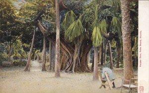 Banyon Tree Palm Beach Florida