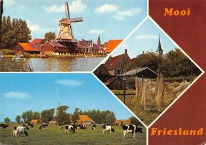 Netherlands Mooi Friesland Cows Field Mill River Boats
