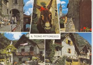 Switzerland, Suisse, Il Ticino Pittoresco, 1984 used Postcard