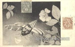 Insectes Couronnes Misc. Royalty & Leaders Postcard Postcards  Insectes Couro...