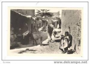 RP Camel on street,Village arabe,10-20s