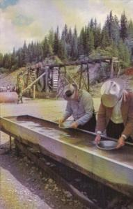 Canada Panning For Gold At Barkerville British Columbia