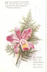 Beautiful Flowers. Birthday Message Tuck Oilette PC # R1117