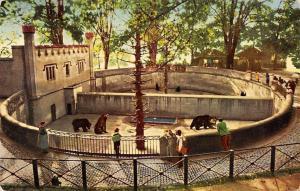Wild Animals Fauna Switzerland Bern Baerengraben, Berne, La fosse aux ours 1956