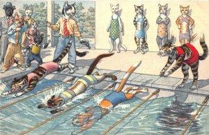 F87/ Alfred Mainzer Dressed Cat Comic Postcard c50s Swimming Race 1