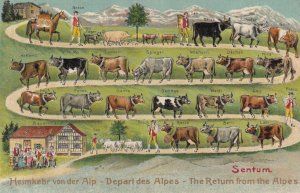 Sentum , Switzerland , 00-10s ; Cows , Return from the Alps