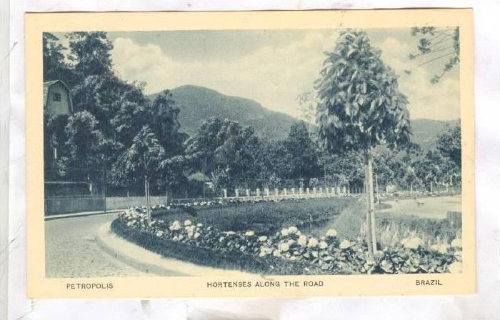 Hortenses along the Road, Petropolis, Brazil, 00-10s