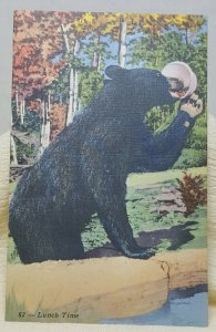 Black Bear Allegany State Park New York Vintage Postcard