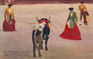 Bull Fight Course De Taureaux Toreador appelant l'attention du Taureau avant ...