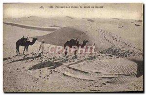 Old Postcard Shifting Sand Dunes in Desert Camels