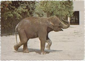 Asian Elephant, Rasha, Racine Zoological Park, Wisconsin, unused Postcard