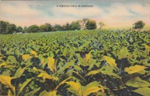 Tobacco Field In Kentucky 1953