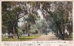 Florida Daytona Ridgewood Avenue 1908 Detroit Publishing