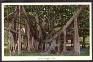 Giant Banyan Tree,FL