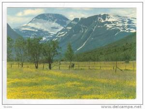 Norway, 50-60s,Avergard mot Tjusakdal. Picturesque View. Mountains & Meadow.