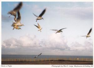 Weybourne & Kelling Birds In Flight Norfolk Postcard