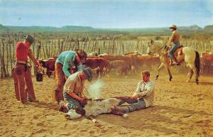Cattle Branding in Texas Originated on Numerous Texas Cattle Ranches Postcard