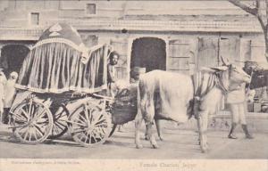 Indian Jaipur Female Chariot Ox Cart