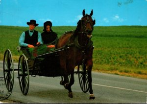 Pennsylvania Amish Country Courting Buggy