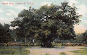 Major Oak , Sherwood Forest , England , 1907