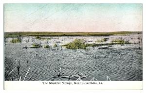 Early 1900s The Muskrat Village near Livermore, IA Postcard *5F32