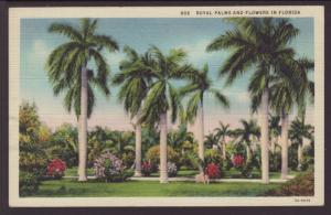 Royal Palms and Flowers,Florida Postcard