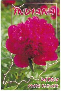 US Indiana Peony State Flower. unused