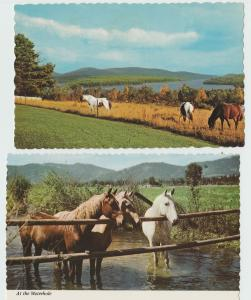 Postcard Horses In Pasture or Paddock Lot of Two Country Scene