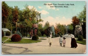 Haverhill MA~Canobie Lake Park~Victorian Lady & Toddlers~Old Apple Tree~c1910