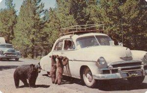 Bear & Car , 1940s
