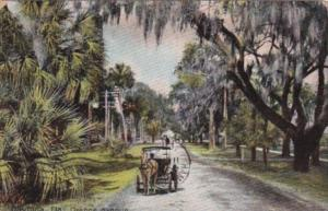 Horse and Carriage On Orange Avenue Daytona Florida 1908