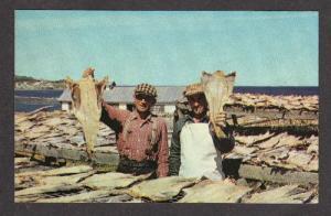 Fishing Fish CLORIDORME GASPE QUEBEC CANADA Postcard Carte Postale
